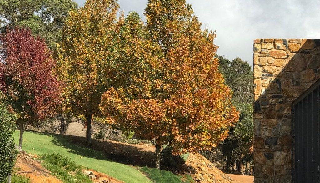 CFautumn trees