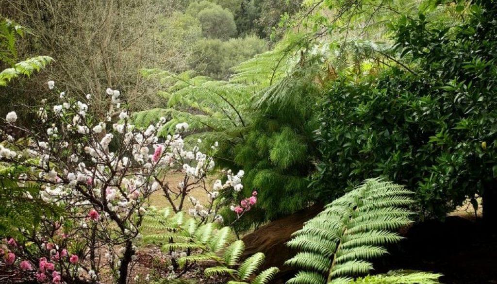 TG Fernery Flowering Almond