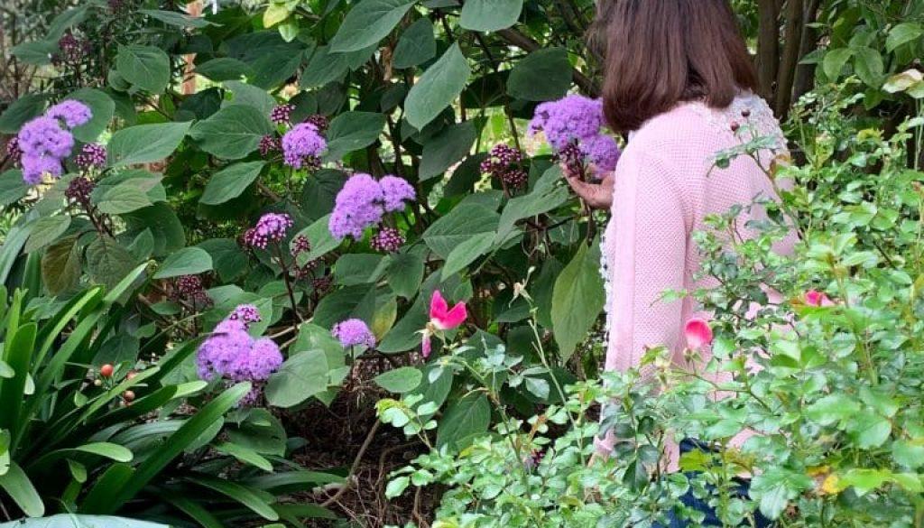 TG - Flowering Splender